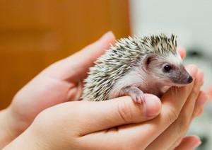 content marketing requires focus like a hedgehog